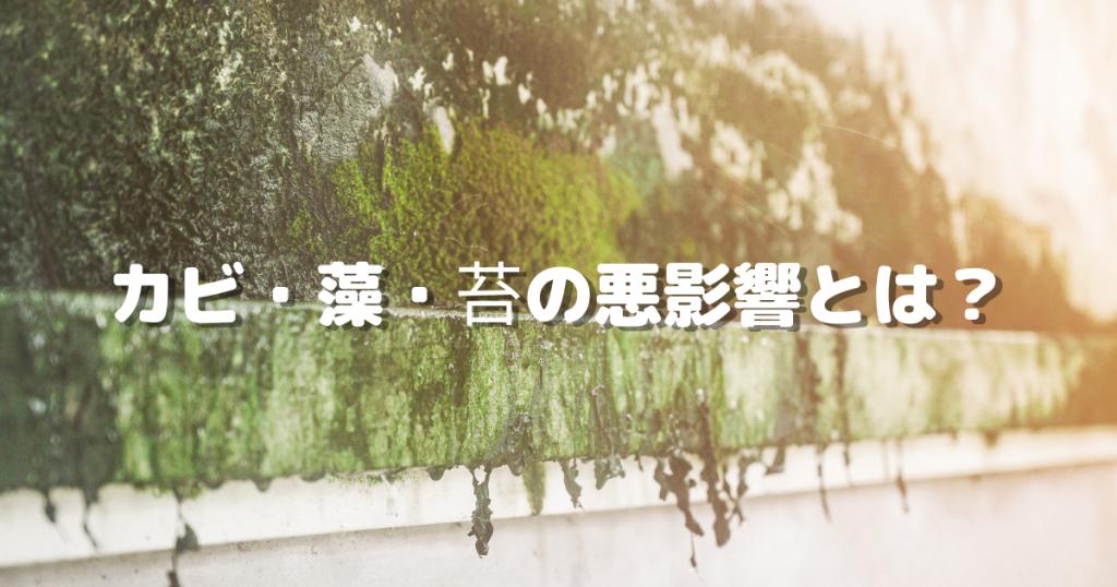 カビ・藻・苔