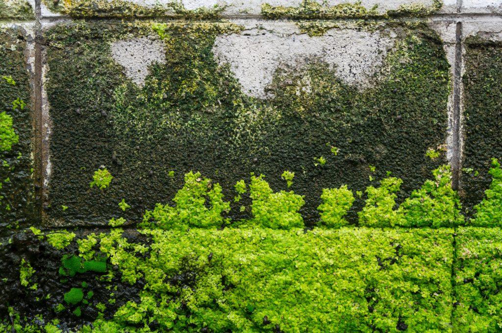 藻 (モ)